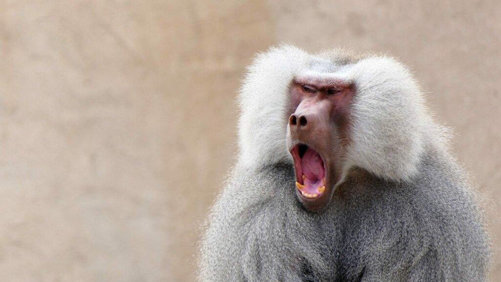 Czerwona małpka, czyli innowacyjność wyzwolona